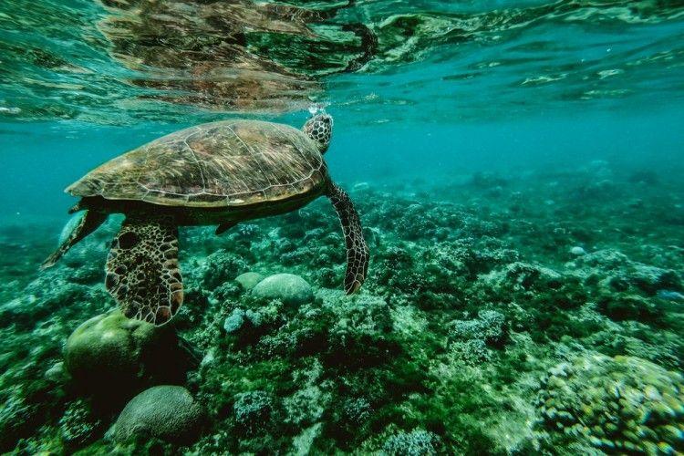 6 Hal Mudah Seseorang Dapat Membantu Mengurangi Polusi di Lautan