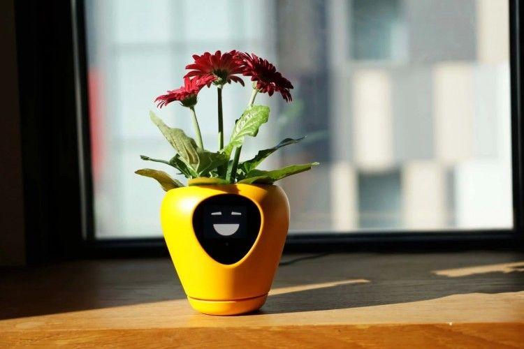 10 Pot Tanaman Menggemaskan Ini Siap Percantik Meja Kerjamu