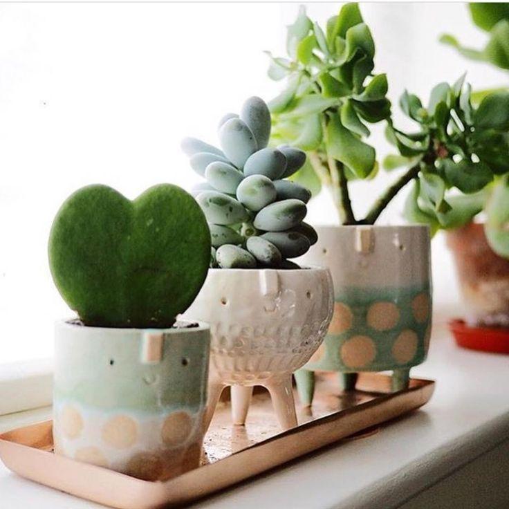 10 Pot Tanaman Menggemaskan Ini Siap Percantik Ruanganmu