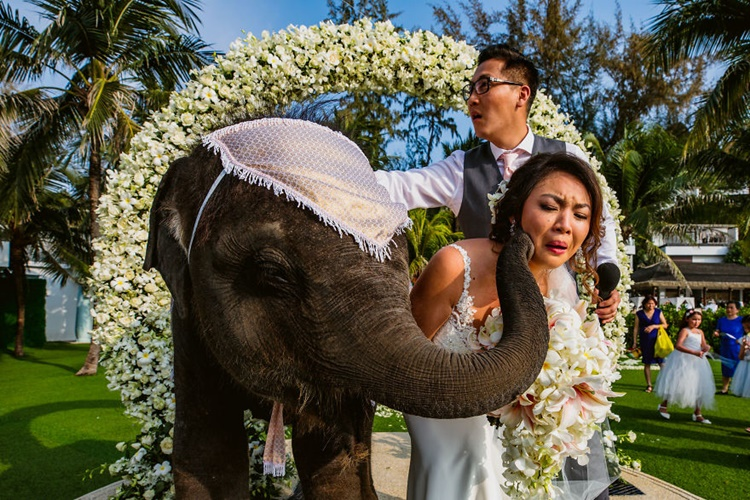 Gagal Romantis! 13 Foto Pernikahan Lucu Ini Justru Bikin Ngakak