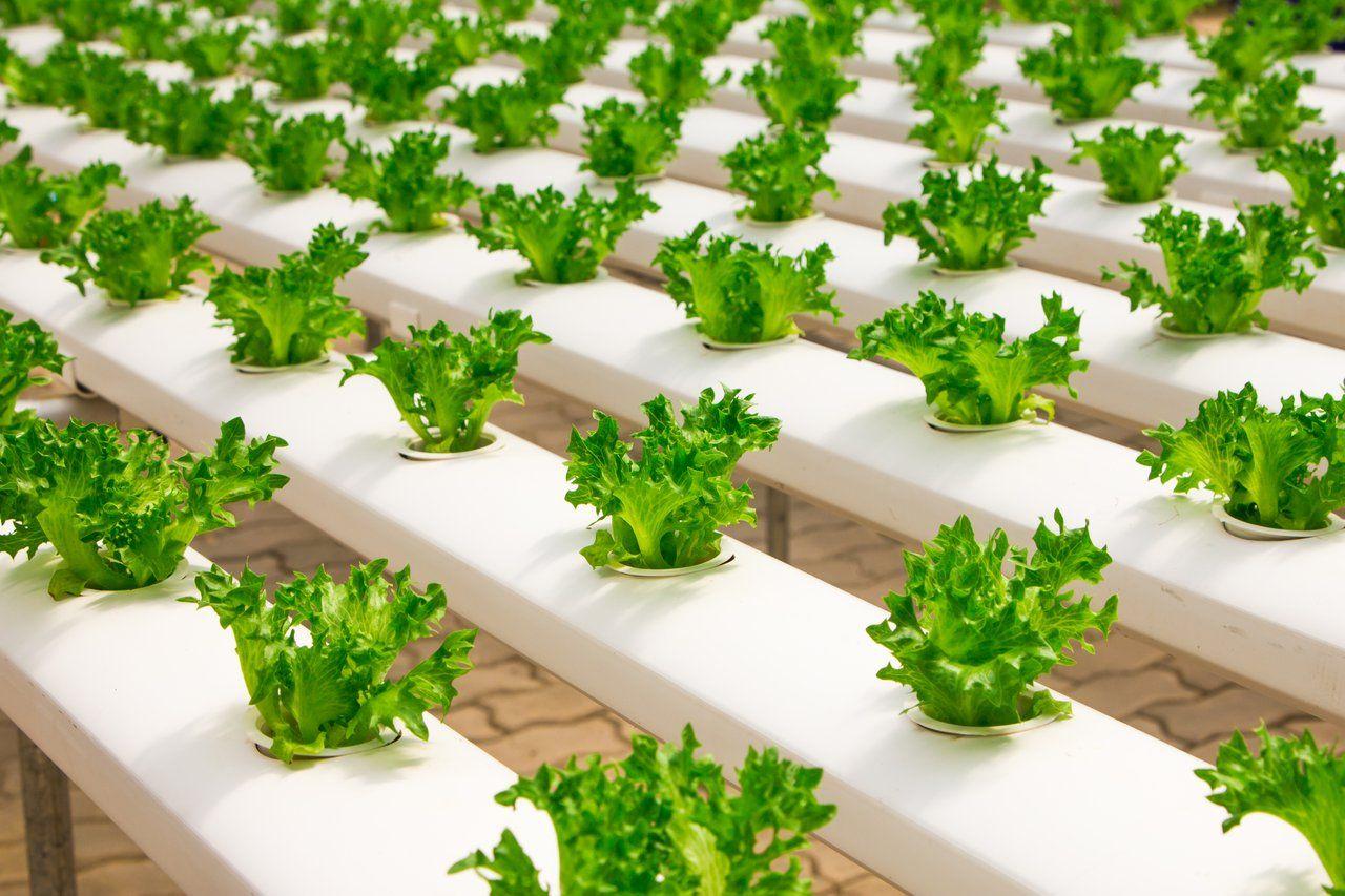 7 Peluang Usaha Bidang Pertanian yang Bisa Dilakukan Dari Rumah
