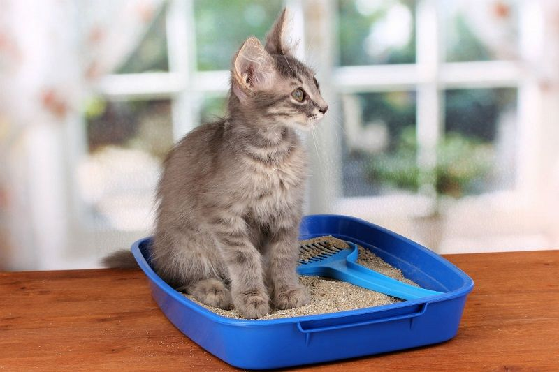 Sadar Nggak, 6 Tindakan Ini Berbahaya untuk Kesehatan Kucing Lho!
