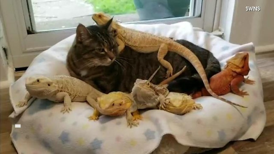 Kocak, Ini 11 Foto Lucu Tali Persahabatan Antara Kucing dan Kadal