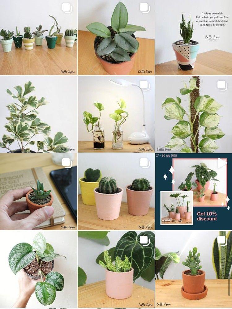 So Cute! Ini 9 Rekomendasi Online Shop Pot Minimalis untuk Tanamanmu