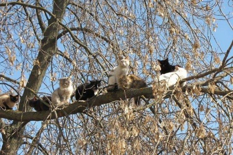 Sebal, 12 Perilaku Kucing Ini Bikin Ngakak Pol
