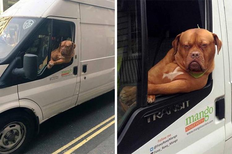 Sebel! 10 Tingkah Anjing Saat Berkendara Mobil Ini Bikin Gemas