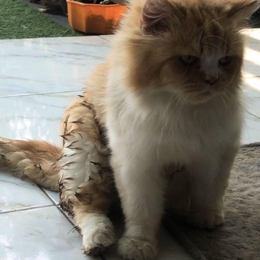 10 Potret Kesialan Kucing Setelah Kecebur Got, Kotor Tapi Tetap Lucu!