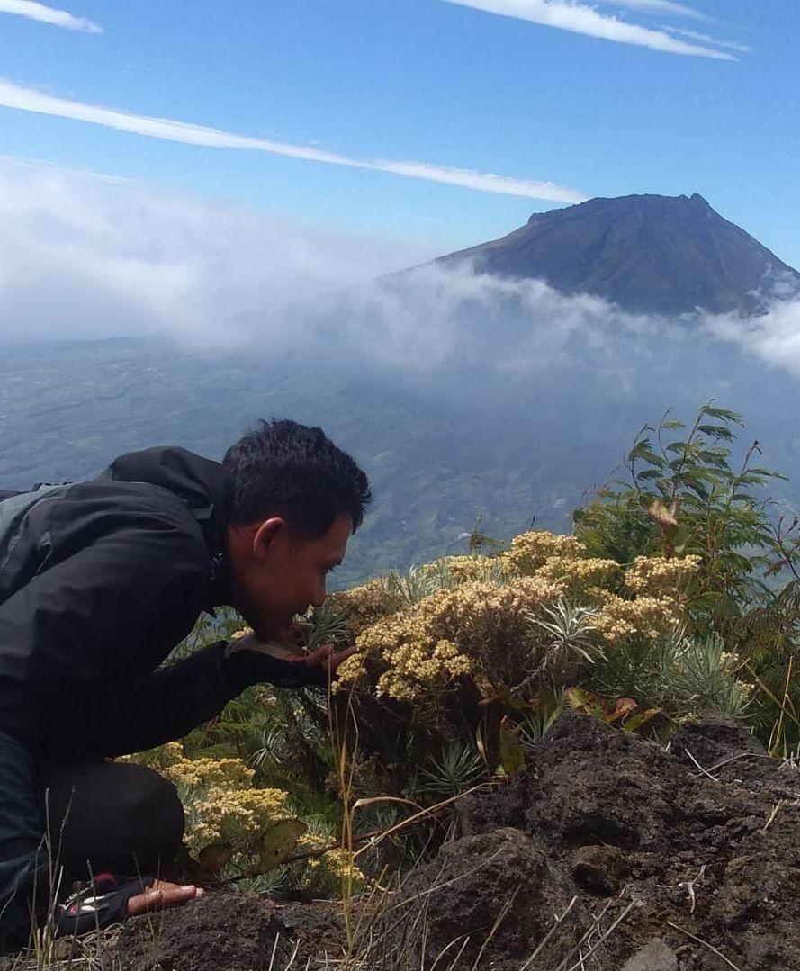 10 Tempat Terindah untuk Melihat Bunga Edelweiss di Indonesia