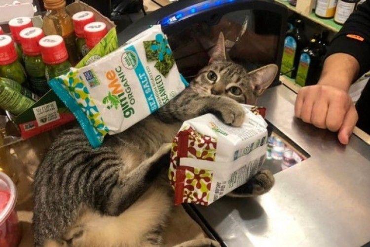 Badung Sekali, 11 Potret Lucu Kucing di Supermarket Ini Bikin Ketawa