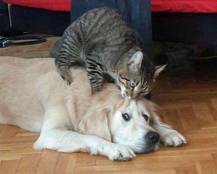 12 Bukti Kucing Lebih Mendominasi dari Anjing Ini Malah Bikin Ngakak