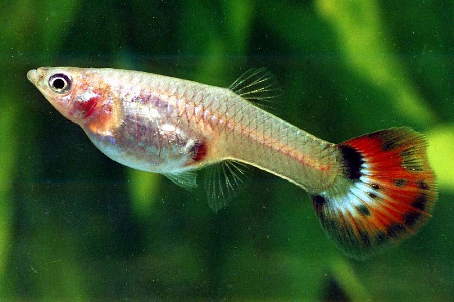 Mulai Rp2.000-an, Ini 9 Ikan Hias Tercantik Yang Harganya Murah