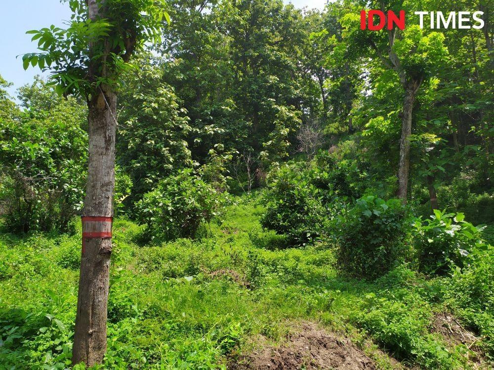 Kuburan Massal Korban G30S Plumbon Jadi Situs Warisan Dunia
