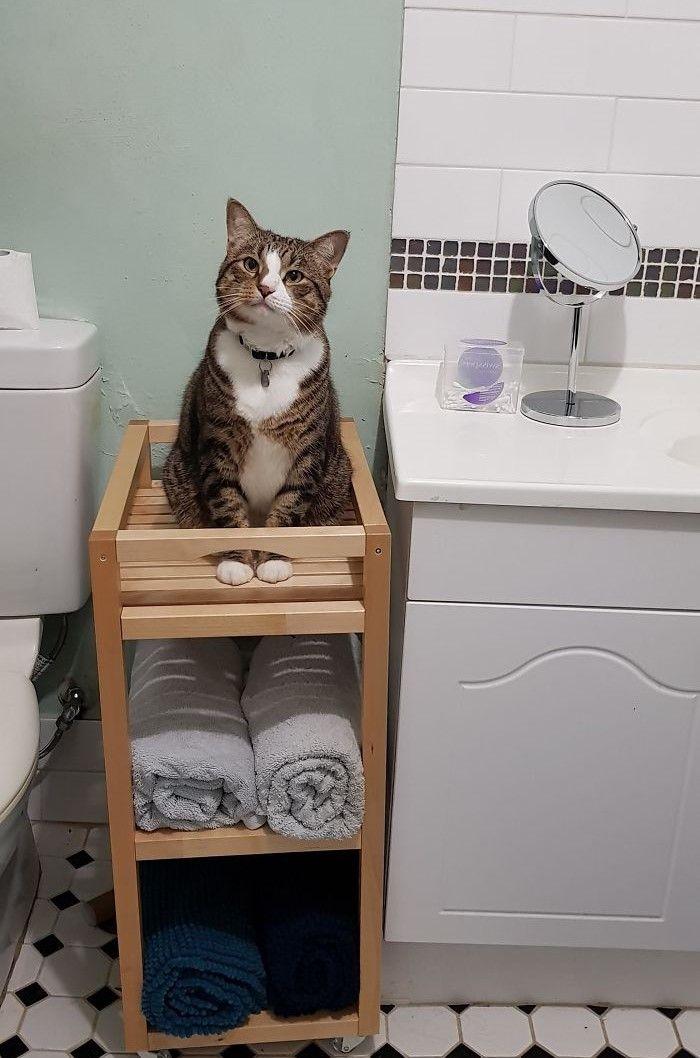 Potret Kucing yang Selalu Kepo Aktivitas Manusia di Kamar Mandi