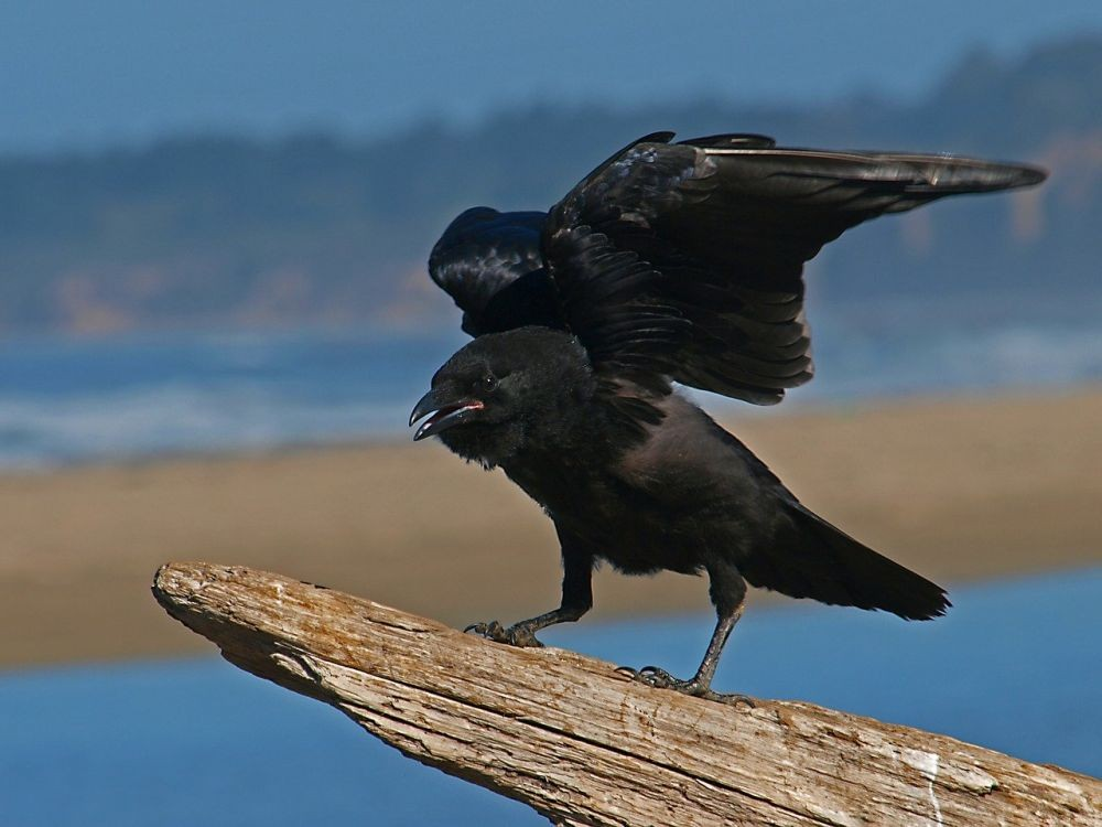 5 Fakta Burung Ababil, Ciptaan Allah Pengingat Sifat Sombong Manusia