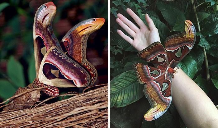 Tak Sesuai Fakta, Foto Binatang Lucu Ini Harus Kamu Perhatikan 2 Kali