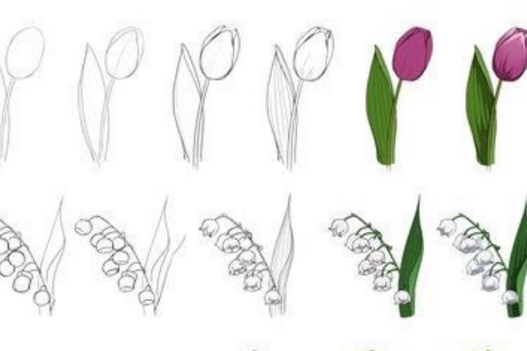 Anti Gagal, Ini 3 Cara Mudah Membuat Sketsa Bunga yang Indah