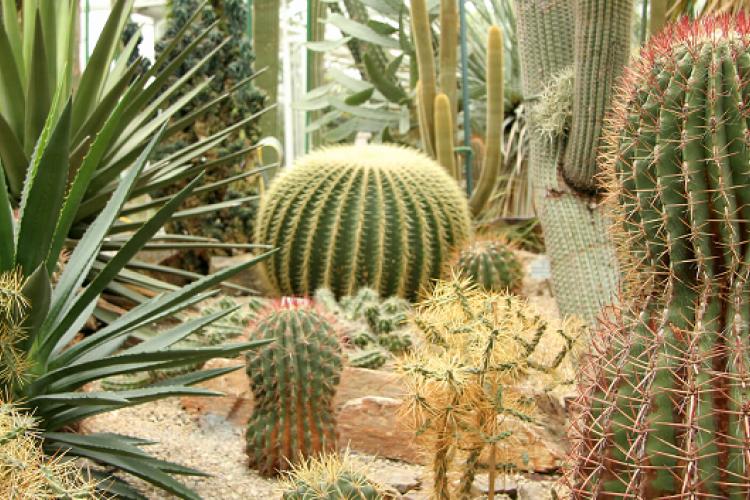 5 Jenis Tanaman Kaktus Cantik Penghias Halaman Rumahmu