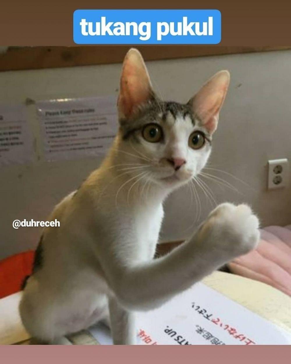 10 Meme Kocak Macam-Macam Pekerjaan Kucing Ini Bikin Gemas