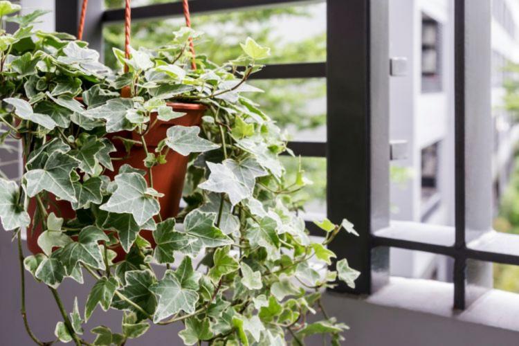 Ini dia 10 Tanaman yang Bisa Menjernihkan Udara di sekitar Rumahmu!