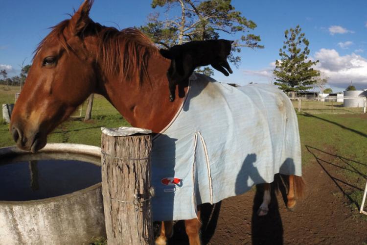 Inilah 15 Foto Kucing dan Kuda yang Menjadi Sepasang Sahabat!