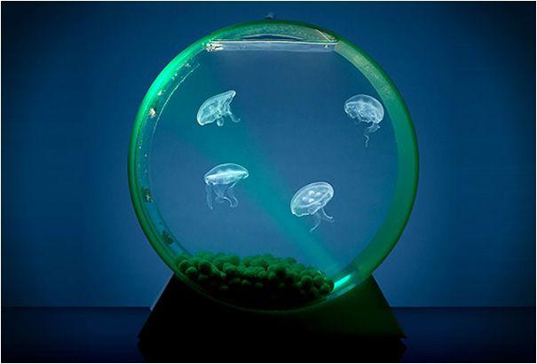 Hiasan Cantik Rumah Minimalis, Ini 10 Ide Akuarium Ikan yang Unik!
