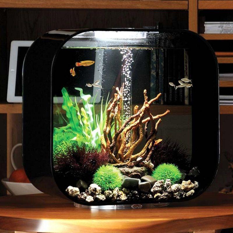 10 Desain Aquarium Unik Untuk Hiasan Rumah Minimalis