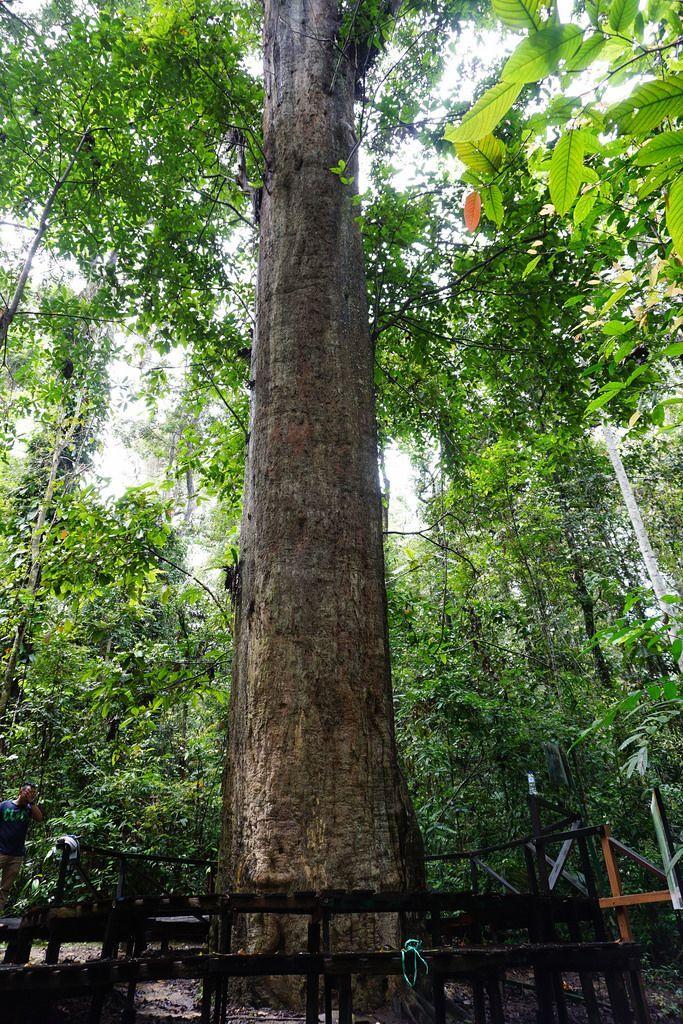 Terancam Punah, Ini 7 Tumbuhan Langka di Indonesia