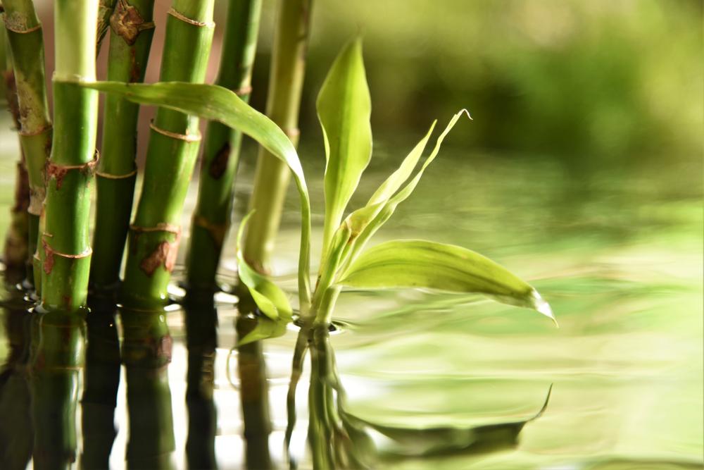 7 Tanaman Air yang Bisa Membersihkan Kolam Ikan