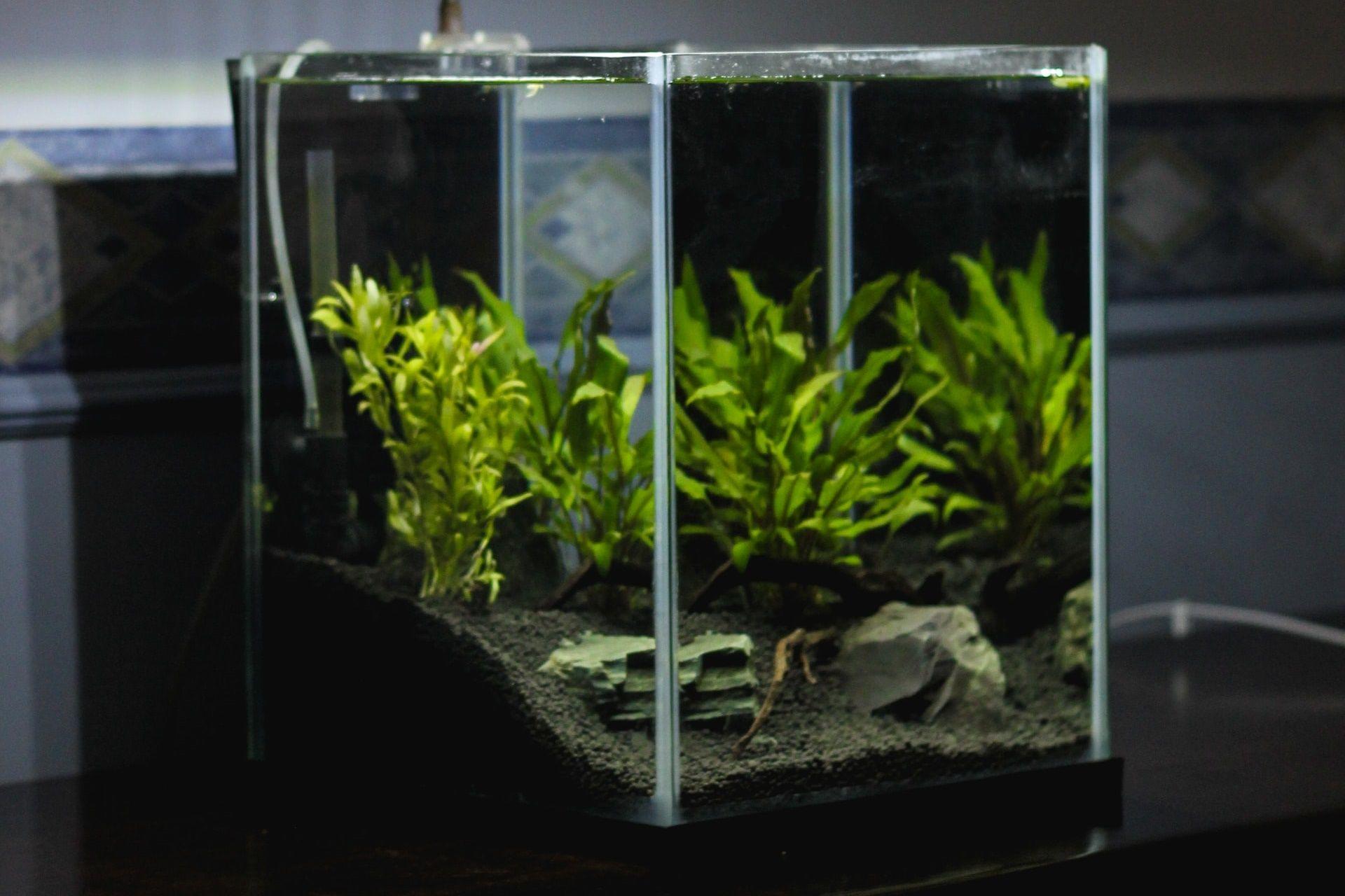 Jadi Hiasan Rumah nan Cantik, Ini Cara Membuat Aquascape Sendiri