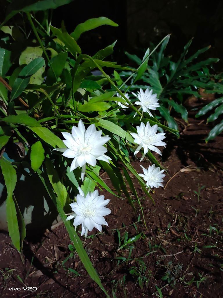 Seperti di Negeri Dongeng, Ini 6 Bunga Terunik di Dunia