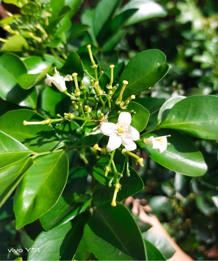 9 Tanaman Obat Herbal Berbunga dan Berdaun yang Kaya Manfaat