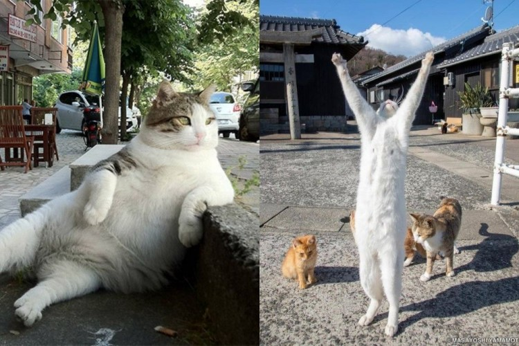 10 Kelakuan Kucing yang Meniru Manusia Ini Bikin Gemes!