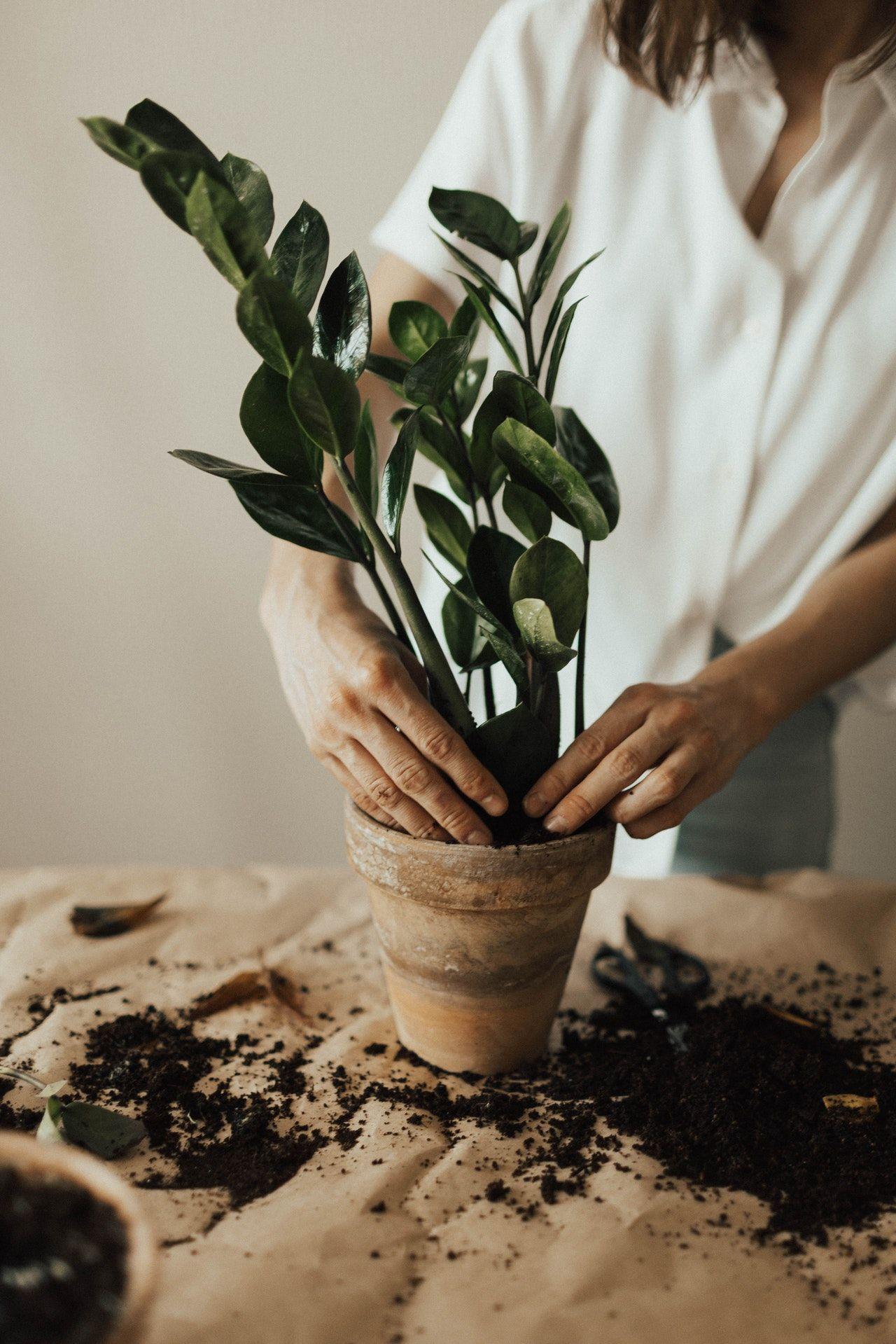 Cocok untuk Hiasan, Ini Jenis Tanaman Bonsai dan Cara Merawatnya