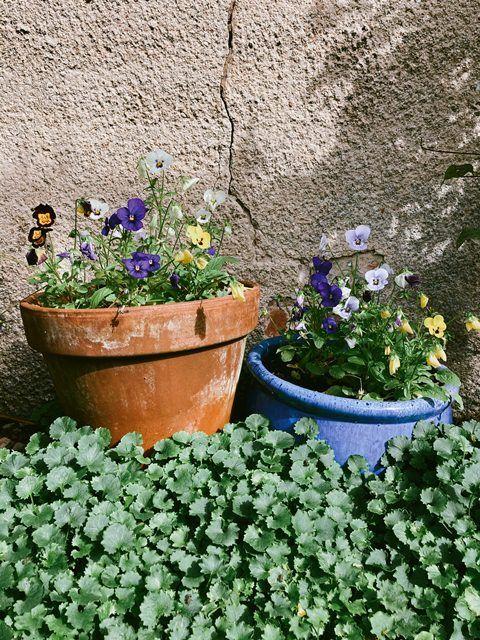 Cara Menanam Sayuran Organik di Rumah Bagi Kamu Para Pemula