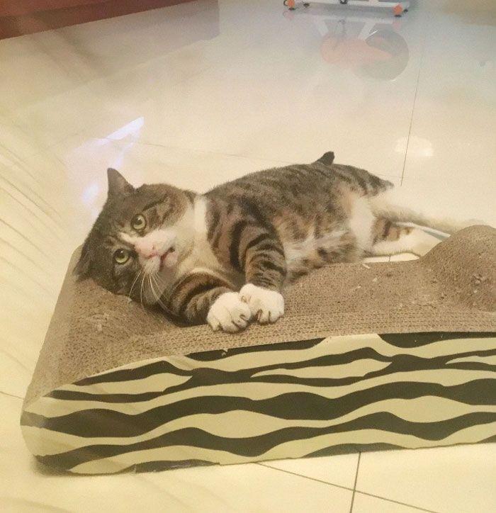 11 Reaksi Kucing Lebay Ini Pas Banget Buat Meme