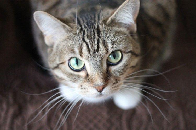 11 Bahasa Tubuh Kucing Ini Menandakan Ia Menyukaimu