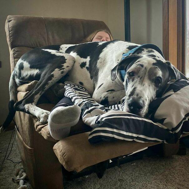 Kocak Banget, 12 Foto Bukti Kalau Anjing Bisa Lebih Besar dari Manusia