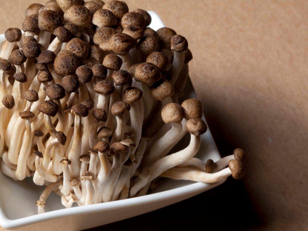 Lezat dan Kaya Manfaat, Ini 15 Jenis Jamur yang Bisa Dimakan