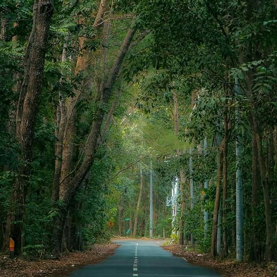 5 Kisah Mistis Alas Purwo, Hutan Tertua di Pulau Jawa