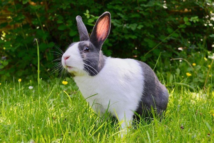 Menggemaskan, Ini 7 Jenis Kelinci yang Paling Banyak jadi Peliharaan