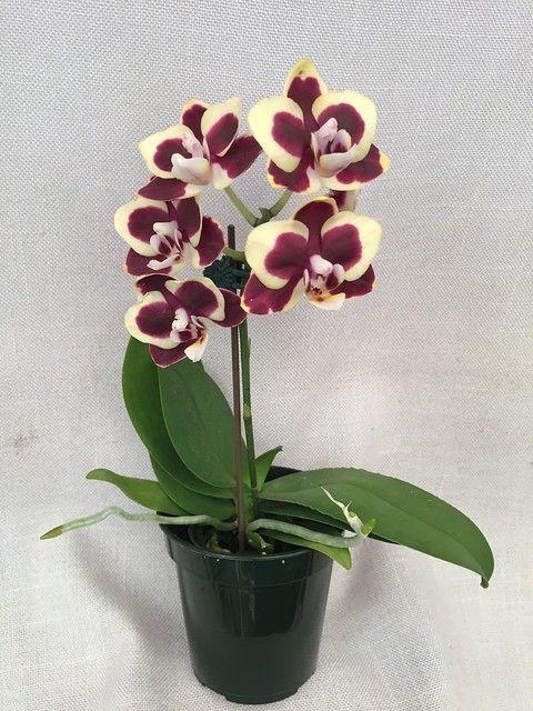 Tambah Koleksi dan Perindah Halaman Rumah dengan 11 Tanaman Hias Bunga