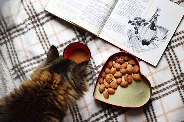 Cat Lovers Harus Tahu! Ini Fakta Unik tentang Kucing