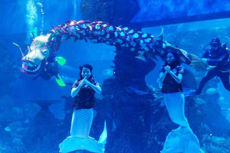Imlek Under Water Persembahan Spesial dari Jakarta Aquarium