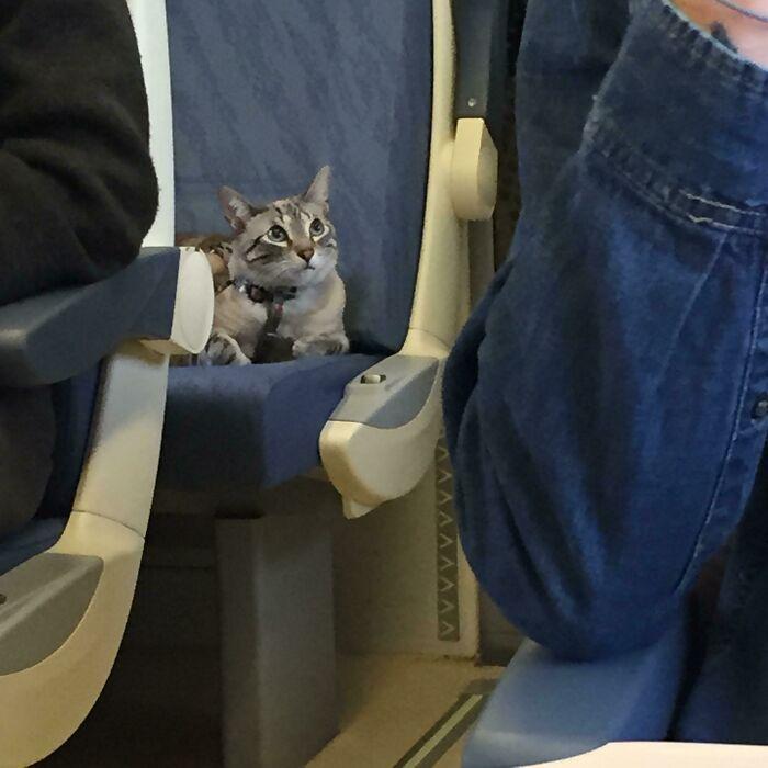 14 Foto Hewan di Transportasi Umum yang Bikin Perjalanan Seru!
