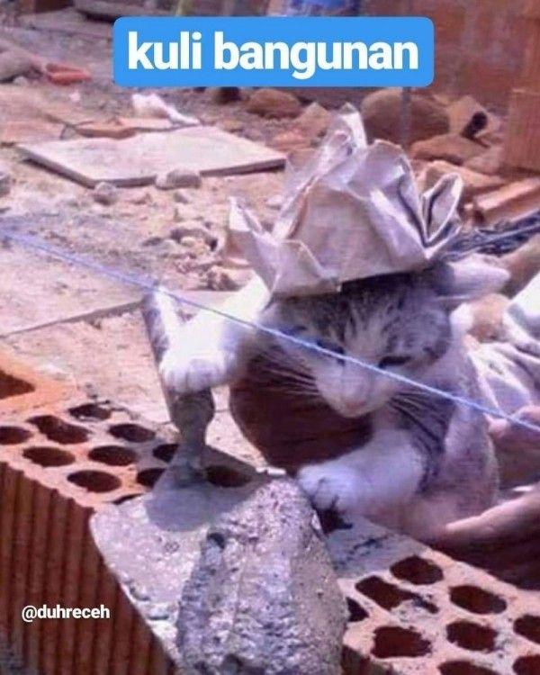 10 Potret Kerja Sama Kucing dan Tukang Bangunan, Kok Bisa Kompak, Sih?