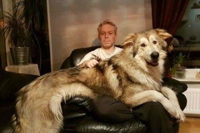 Potret Anjing Tak Sadar Betapa Besar Dia