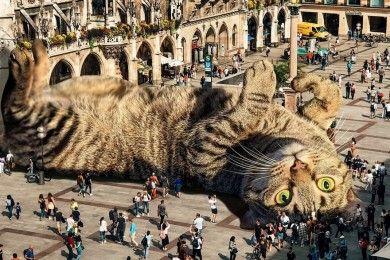 Editan Foto Buat Kucing Terlihat Raksasa ini Menggemaskan Banget