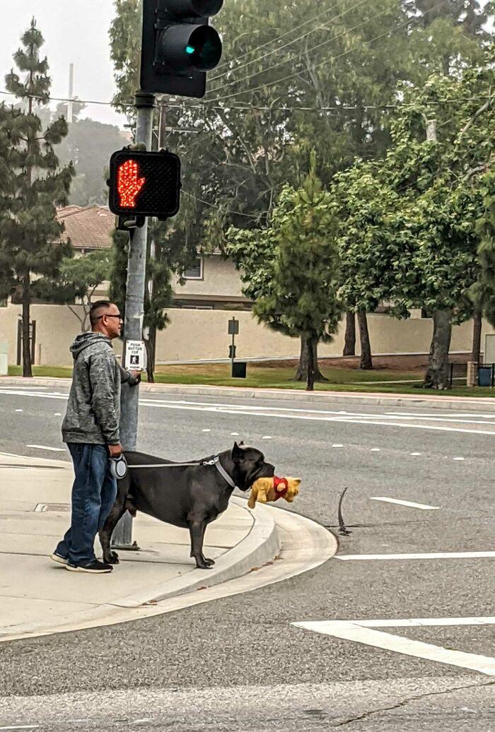 Potret Anjing yang Tak Sadar Betapa Besarnya Dia
