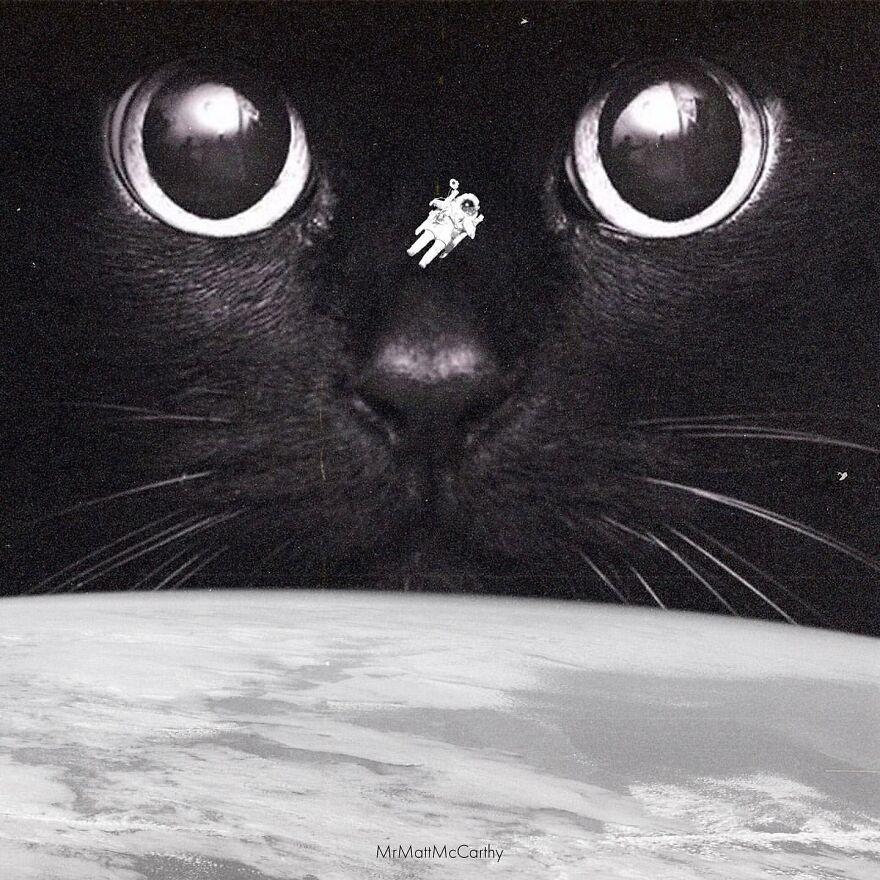 Editan Foto yang Buat Kucing Terlihat Raksasa ini Menggemaskan Banget!
