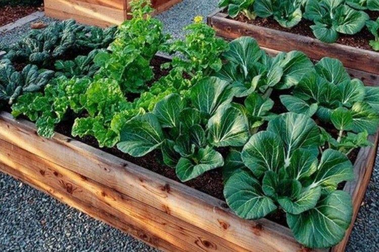 Peluang Untung Besar, Ini 7 Ide Bisnis Pertanian Rumahan